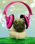 Pugs not drugs / by Kira Allen-Franke