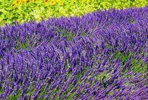 Provence franciaország
