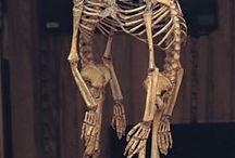 #Bonessss i Kripy~ / O kościach dziwach i strasznych szitach :v