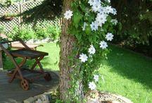 Garten - gestalten / Deko etc