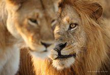 David Lloyd Wildlife Photographer