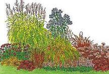 Pflanzen - Gruppe dunkelrot