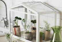 IKEA terrarium