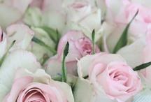 Roses / by Debra McRae