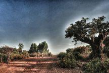 Bahir Dar landscape / Ethiopia