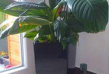 plantes jardin