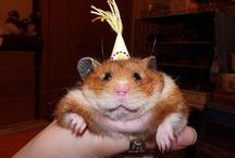 Έχεις τα γενέθλιά σου