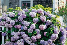 Flower Bed Ideas / by Tanya Carr