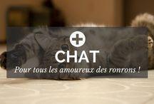 Chat / Vous aimez les animaux ? Vous aimez les chats ? Fans de boite à ronron ? Alors vous êtes au bon endroit et ce tableau est fait pour vous. Abonnez-vous ! - par POSITIVR.fr