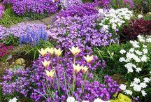 Garden and rockery ideas