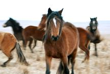Horses, Beautiful Horses!