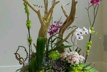 Orchideen-sträusse