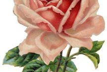 bilder, blomster