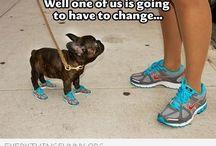Funnymals !