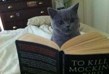 Crazy Cat Lady / by Beth Norkus
