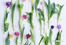 Blume des Monats /  Kampagnen-Kalender  Verführen Sie Ihre Kunden, gehen Sie auf unsere Kampagnen ein Alle Blumenbüro Holland Kampagnen auf einen Blick