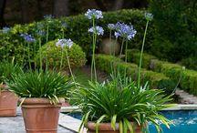 Mon jardin extraordinaire ...