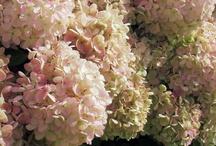 Filling my Dream Garden / by Traci Ziemer