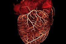 Cardiology / heart, cardiac, cardiology, disease, attack
