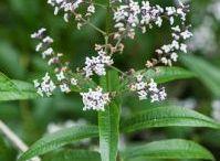 Botanica erbe selvatiche