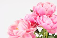 Peonies flower boquet