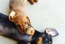 Ninou / Les chiens les plus beaux du monde