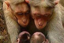 Szüleik kisgyerekeikkel