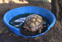 Tortoise life