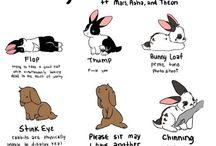 Bunnies <3