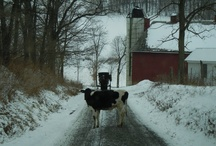 A country life... / by Stephanie Heenan-Orr