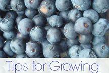 Jardin / Partage et échange sur le jardinage et plus particulièrement le potager
