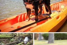 Camping With Dogs / From packing lists to traveling tips, we've compiled dog-friendly tips for your next camping trip!