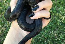 Snakes come from Slytherin
