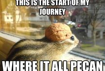 Get Nutty! / Some fun memes, pictures & memos to get you feeling just a little nutty.