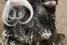 ..małpiaki.. / niby tak do nas podobne ale to my musimy o nie dbać aby mogły żyć i ......