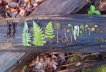 Ferns & Fiddleheads