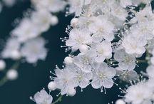 fehér viràgok tavaszi kép