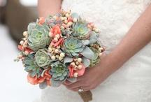 Bouquet succulente