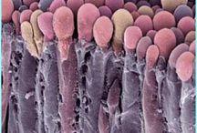 al microscopio