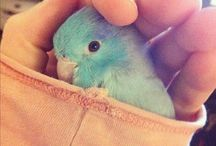 Parrotlet / by Kimberly Pierce
