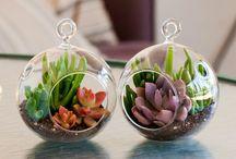 G-Succulents