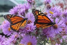 BUTTERFLIES & OTHER BUGS / Attract them or keep them away...