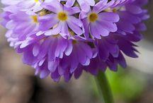 krása květin