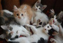 Kitties.  / by W M
