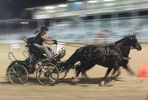 Devon Horse Show / Devon horse and dressage show