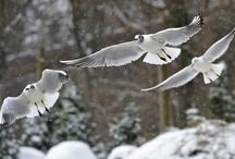 Kuşlar ve yuvaları