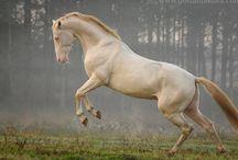 Horses / by Lisa Ivory