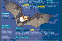 Appendre le francais - infographies d'animaux et de l'environnement