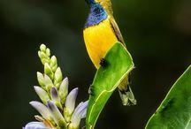 Hummingbirds & Cia