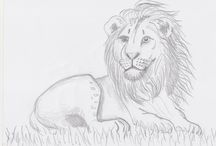 Animals / This board shows my drawings about the animals in the world